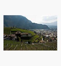 Hillside Vineyard, Bolzano/Bozen, Italy Photographic Print