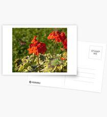 Hummingbird Hawk Moth, Piazza Walther Garden, Bolzano/Bozen, Italy Postcards