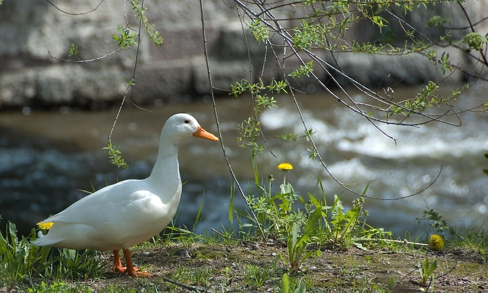 """""""Just ducky!"""" by L Lee McIntyre"""