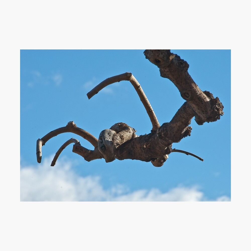 """""""Spider"""", Bolzano/Bozen, Italy Photographic Print"""