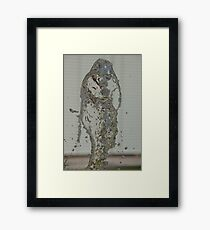 Water Snake, Bolzano/Bozen, Italy Framed Print