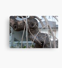 Animal Head in Tree Branch, Bolzano/Bozen, Italy Metal Print