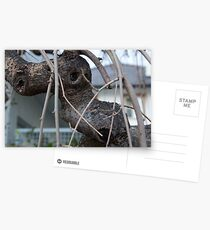 Animal Head in Tree Branch, Bolzano/Bozen, Italy Postcards