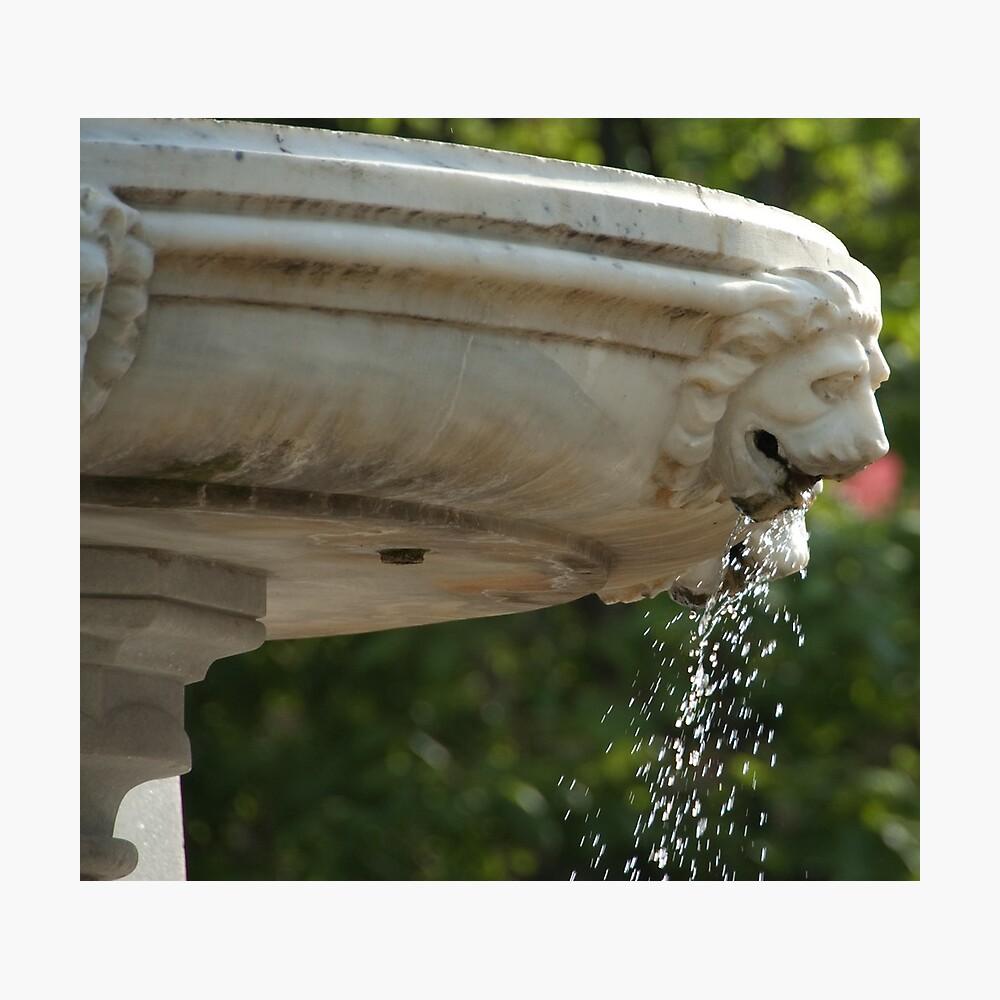 LIon Head Fountain, Piazza Walther, Bolzano/Bozen, Italy Photographic Print