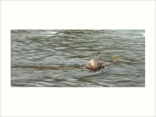 Heading Upstream, Talvera River, Bolzano/Bozen, Italy by L Lee McIntyre
