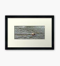 Heading Upstream, Talvera River, Bolzano/Bozen, Italy Framed Print