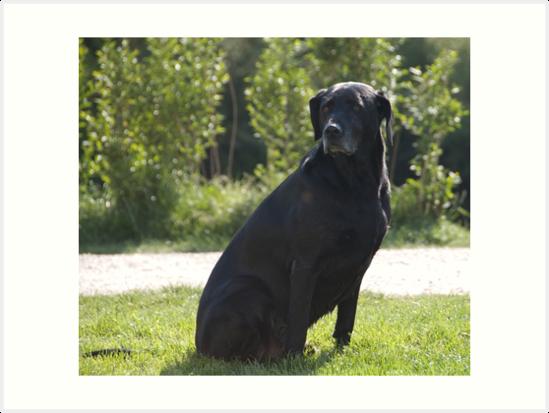 Black Dog, near Talvera River, Bolzano/Bozen, Italy by L Lee McIntyre