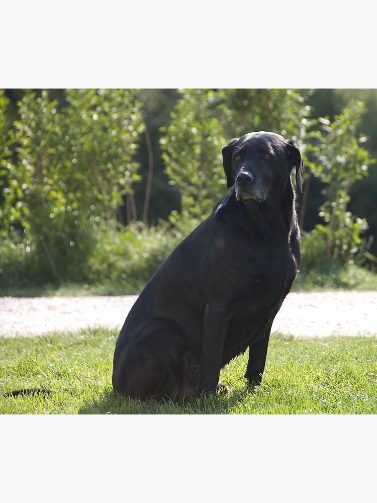 Black Dog, near Talvera River, Bolzano/Bozen, Italy by leemcintyre