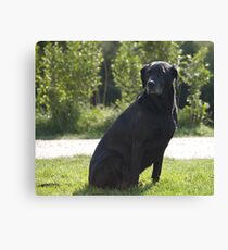 Black Dog, near Talvera River, Bolzano/Bozen, Italy Canvas Print