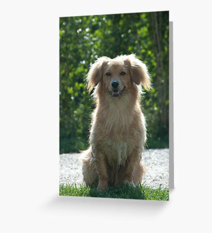 Little Dog, near Talvera River, Bolzano/Bozen Greeting Card