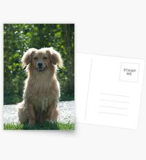 Little Dog, near Talvera River, Bolzano/Bozen Postcards