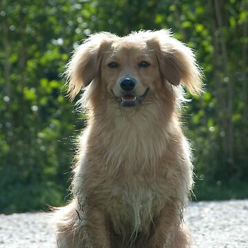 Little Dog, near Talvera River, Bolzano/Bozen by leemcintyre