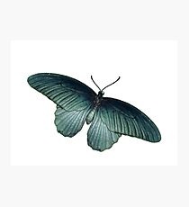 Real Butterfly No. 5 - Metallic Blue-Green Photographic Print