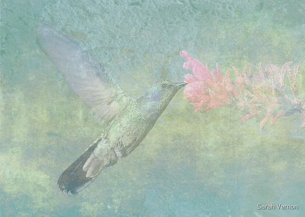 Hummingbird Tune by Sarah Vernon