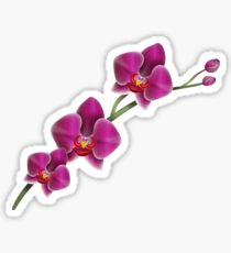 Orchid Sticker