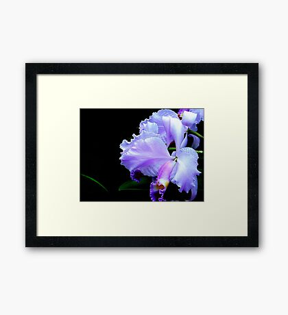 The Mystery of an Orchid Framed Print