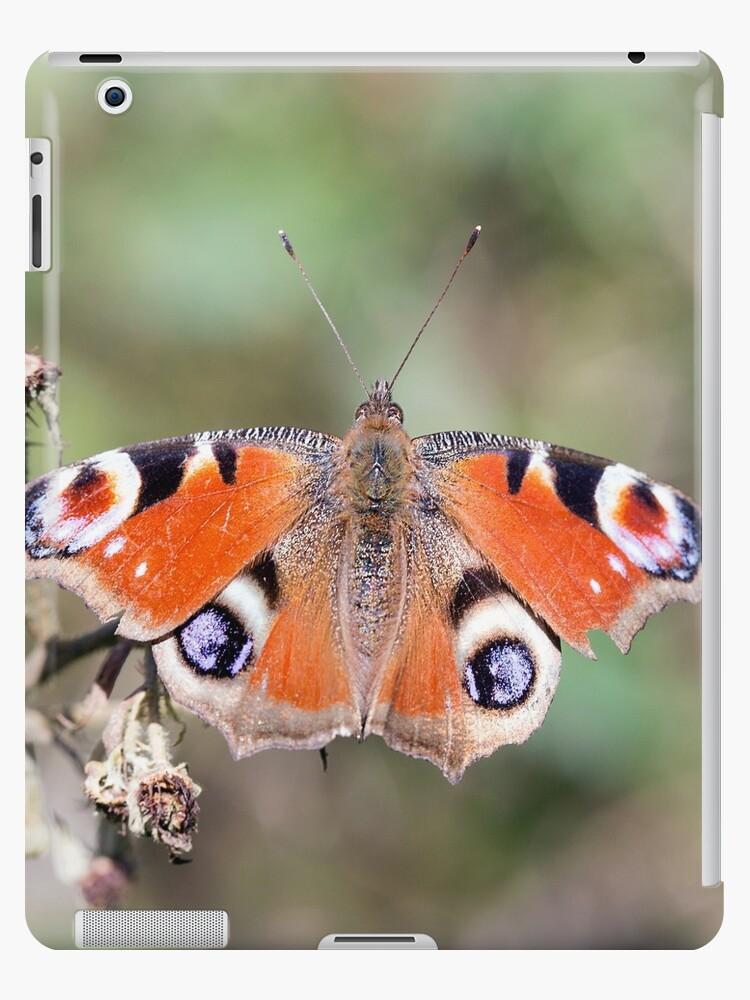 Butterfly by jackiedavies