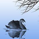 Blue swan 2 by shalisa