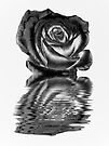 Chrome rose by shalisa