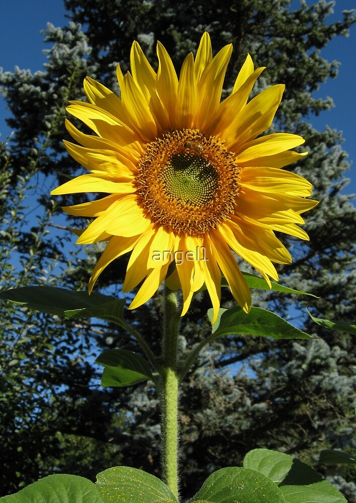 Sonnenblume by ©The Creative  Minds