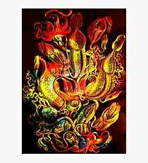 Plants & Animals, carnivorous, pitcher plants, tropical, Nepenthes, psychedelic, art, illustration, haeckel,  Photographic Print