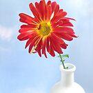 Gerbera Daisy in a White Vase by LouiseK