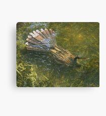 Water Turkey Canvas Print