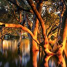Mangrove dawn, Lota, Brisbane. by Robert Ashdown