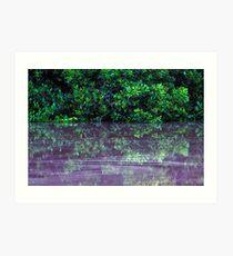 Mangrove reflections Art Print