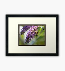 On a Snowberry Clearwing Day Framed Print