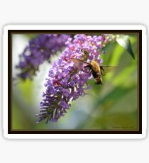 On a Snowberry Clearwing Day Sticker
