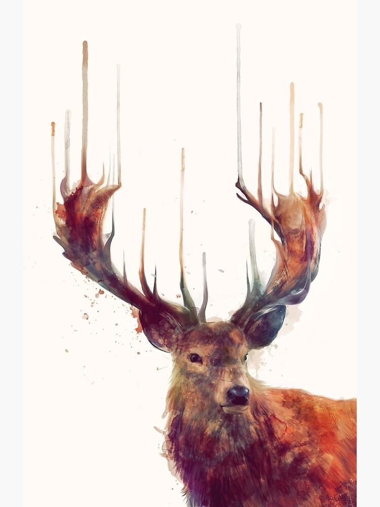 ciervo rojo de AmyHamilton