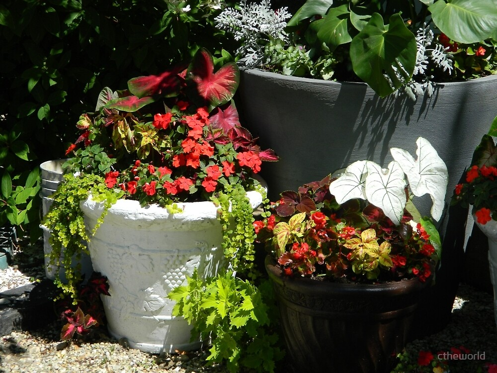 Container Plants by ctheworld