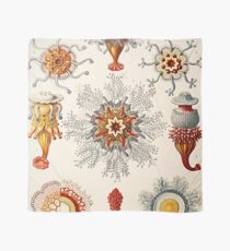Plants & Animals, ocean, sea creature, jelly, jellyfish, medusa, marine, psychedelic, art, illustration, haeckel,  Scarf