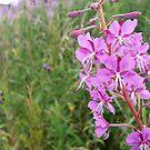 Pink Flower Stalk by Richard Winskill