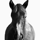 Horse by Amy Hamilton