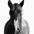 Horse von Amy Hamilton