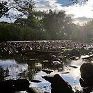 Stream and Sun by Richard Winskill