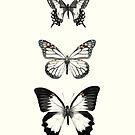 Butterflies // Align von Amy Hamilton