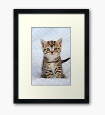 Cute Tabby kitten on a blue starry background Framed Print