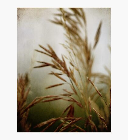 wild grasses 8 Photographic Print