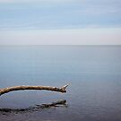 Lake Erie Tranquility by Shawna Rowe