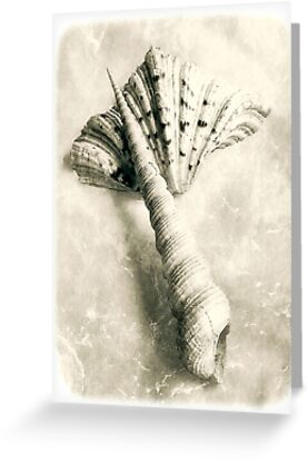 Sea Shells #6 by LouiseK