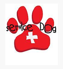 Service Dog Photographic Print