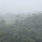 Fog on Nahnalaud Peak - Pohnpei, Micronesia by Alex Zuccarelli
