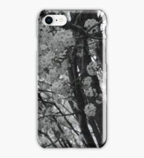 White Tree Blossoms iPhone Case/Skin