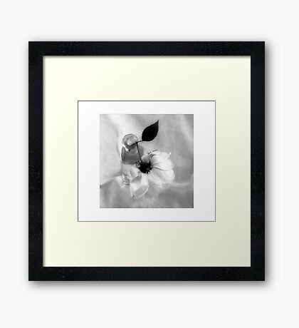 Dr. Van Fleet Rose Framed Print