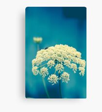 Summer Lace Canvas Print