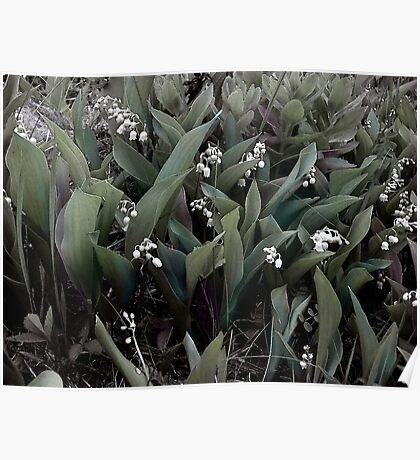 Lilies of the Valley Mindscape No 1 Poster