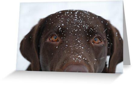 Snow Dog by Corkle